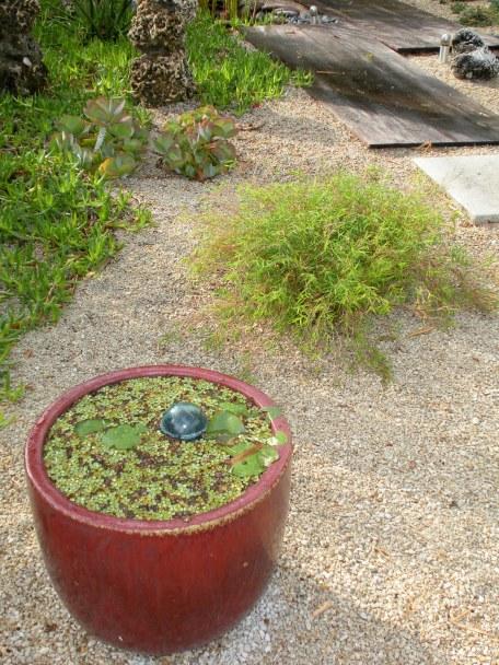 caourtyardwaterlilies
