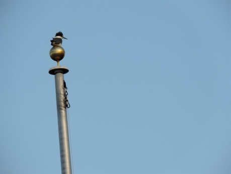 Kingfisher finial