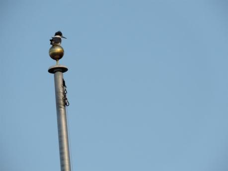 Kingfisher finial