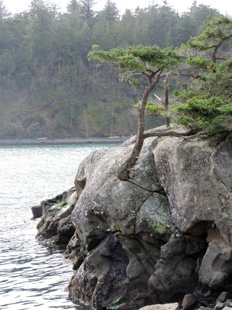 tree:rock